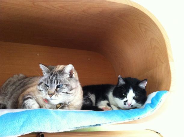 demander la garde de votre animal maison saint nicolas de port 7 nuit. Black Bedroom Furniture Sets. Home Design Ideas