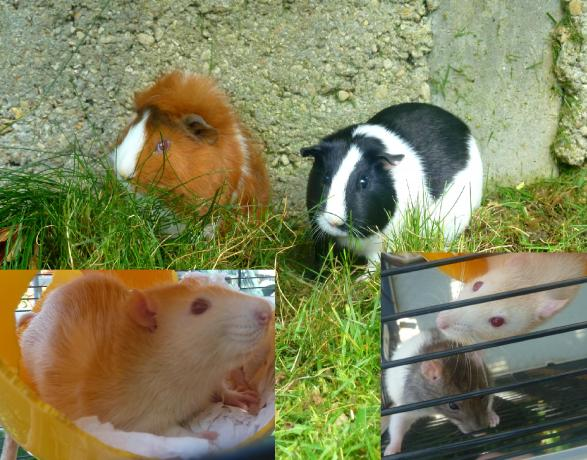 Garde d'animaux de compagnie entre particuliers Maison Sainte Genevi u00e8ve des Bois  # Pharmacie De Garde Sainte Geneviève Des Bois