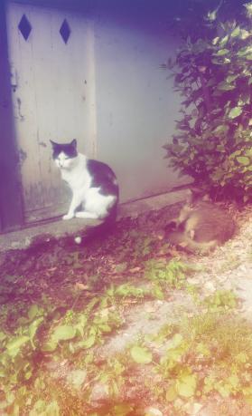 chat saint brieuc