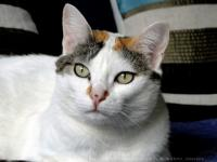 chat velizy villacoublay